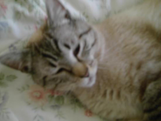 mon amour de petit chat