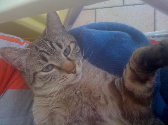 Mon joli PUSSY CAT