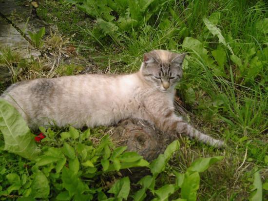 Petit Pussy allongé dans le jardin