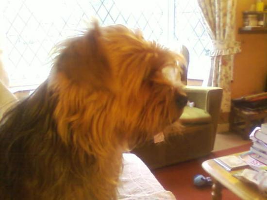 MAX, l'autre chien de ma cousine Michelle, en Angleterre