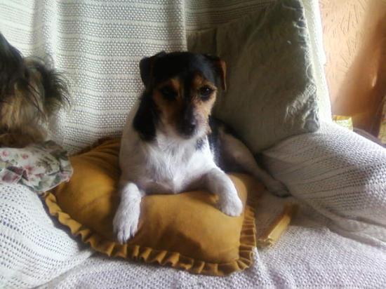 JANEY le chien de ma cousine Michelle, en Angleterre