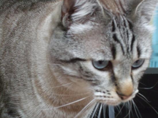 Pussy, août 2009