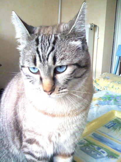 Mon joli chat