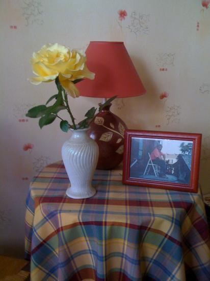 """Une rose jaune """"Régine"""""""