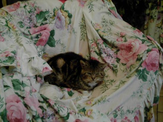 chalet, le chat laid - voir les poèmes