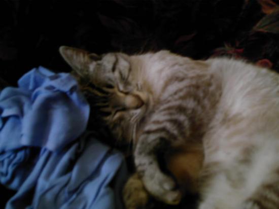 Petit Pussy endormi