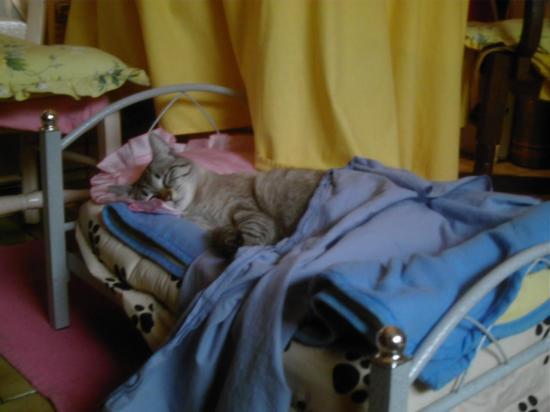 Pussy dans son petit lit