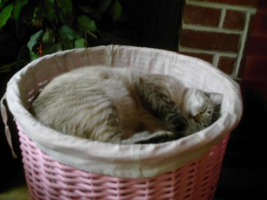 Pussy dans le panier de bûches