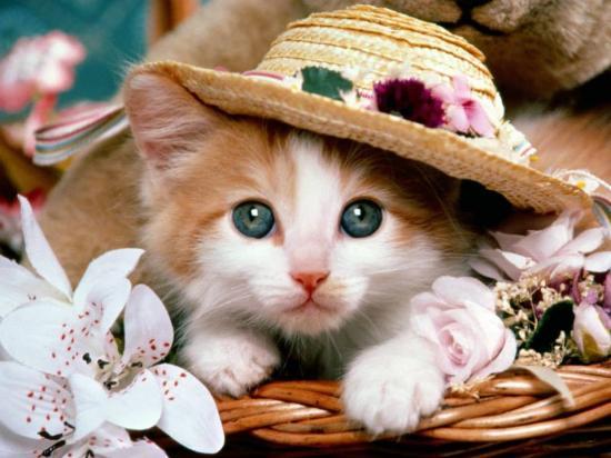 chatonchapeau.jpg