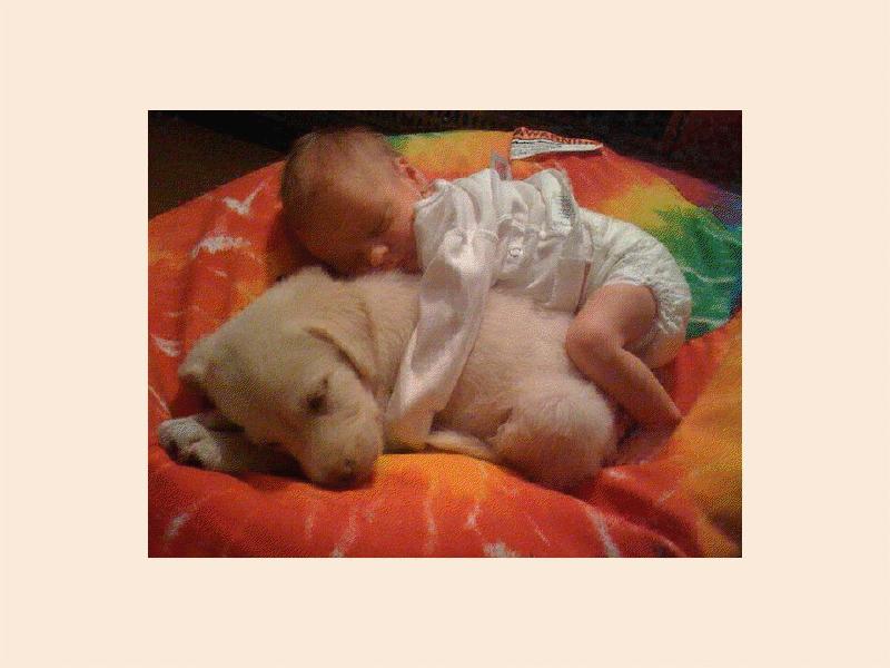 chien-et-bebe.png