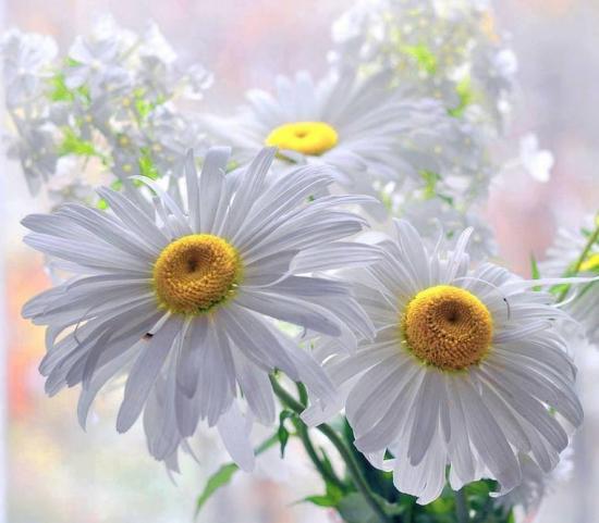 Fleurs marg