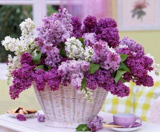 Fleurslilsite