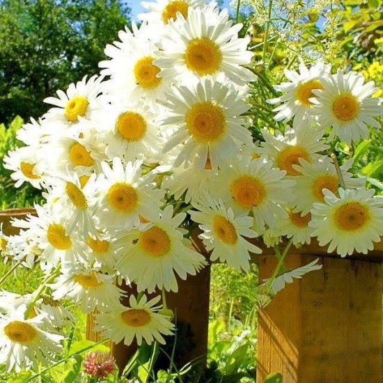Fleursmarguer