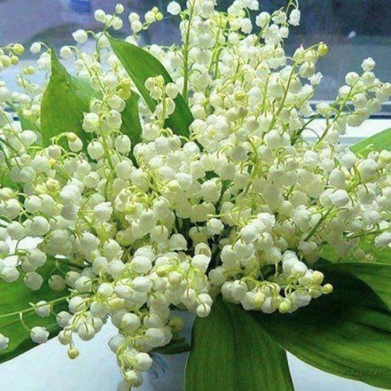 Fleursmuguet