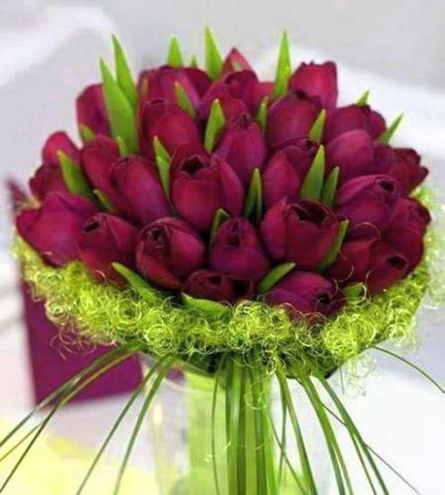 Fleurstulipesp