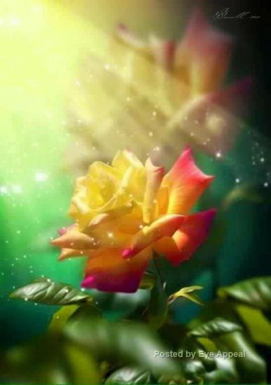 Rose rom