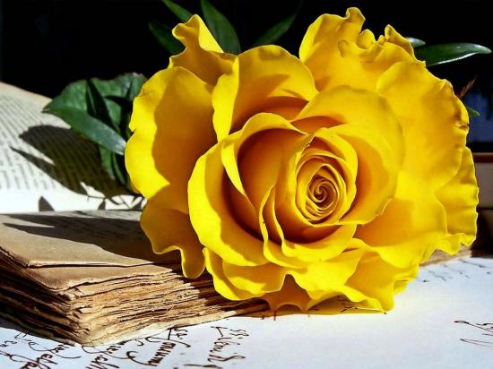 rosejaunelivre.jpg