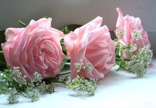 roses033-501082706596408-226861370-n-1.jpg