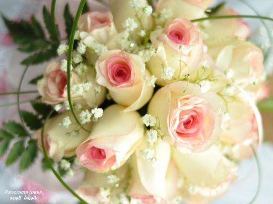 roses3co.jpg