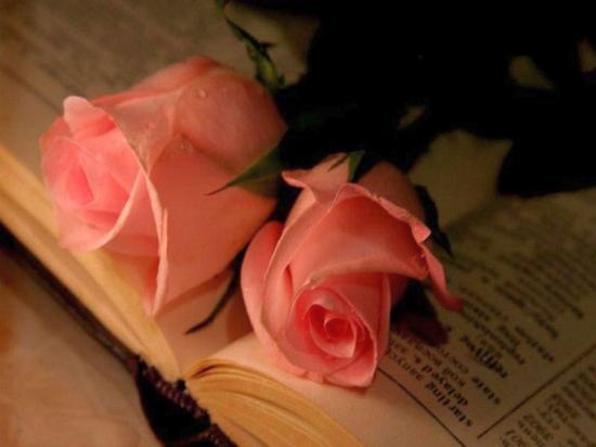 rosesaumon.jpg