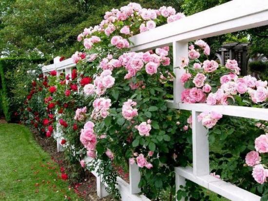 rosesbarriere.jpg