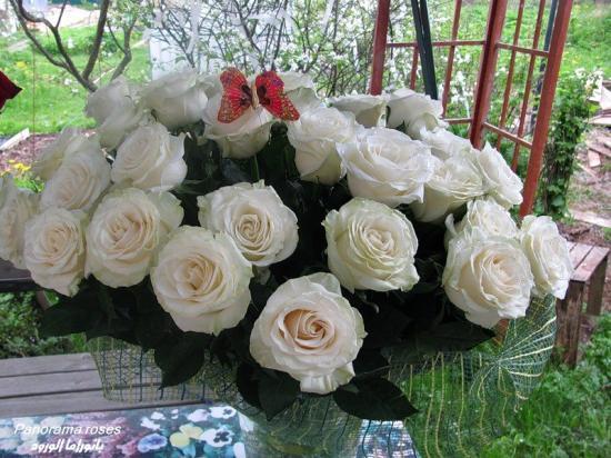rosesblanchespap.jpg