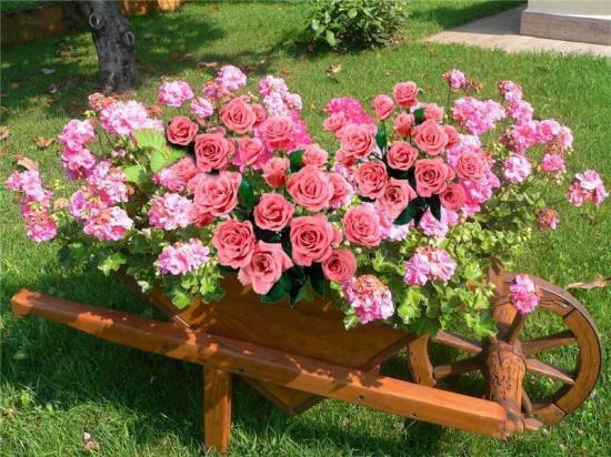 Rosesbrouette2 1