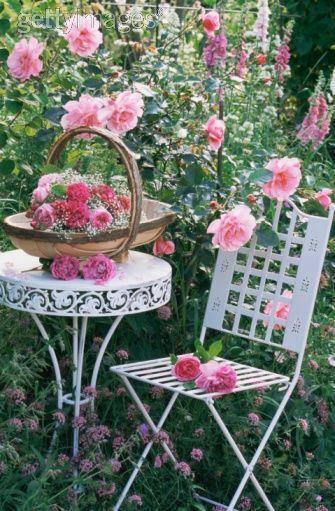 Roseschaisesjard
