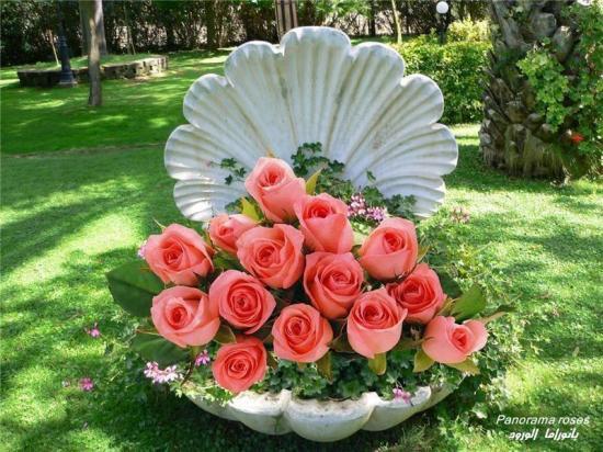 Rosescoq 1