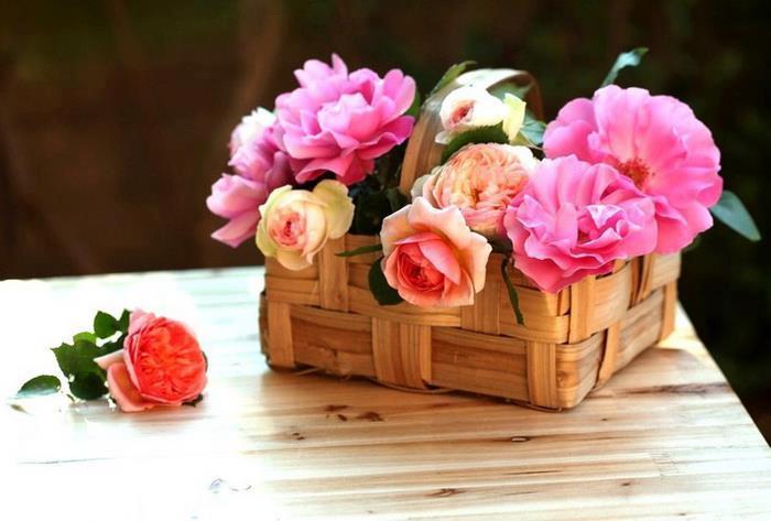 rosesdivpan.jpg