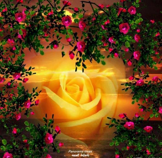 rosesetfleursfus.jpg