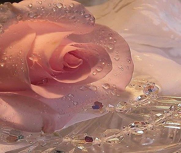 rosesgoutteseau.jpg