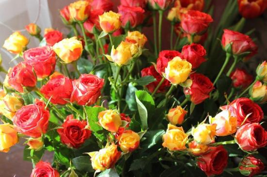 Rosesrgeja