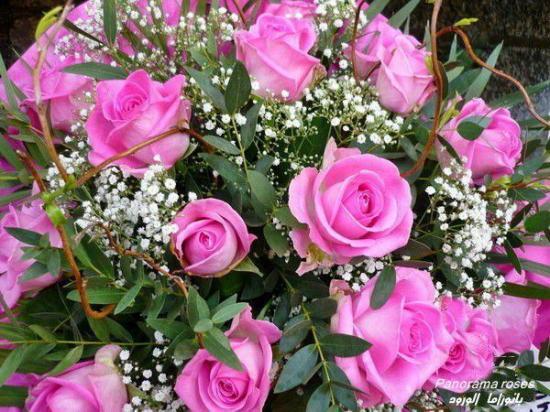 rosesrosesf.jpg