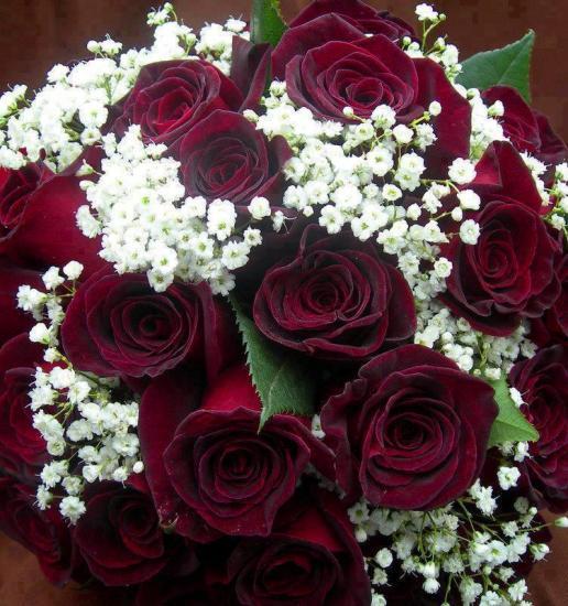 rosesrouges.jpg