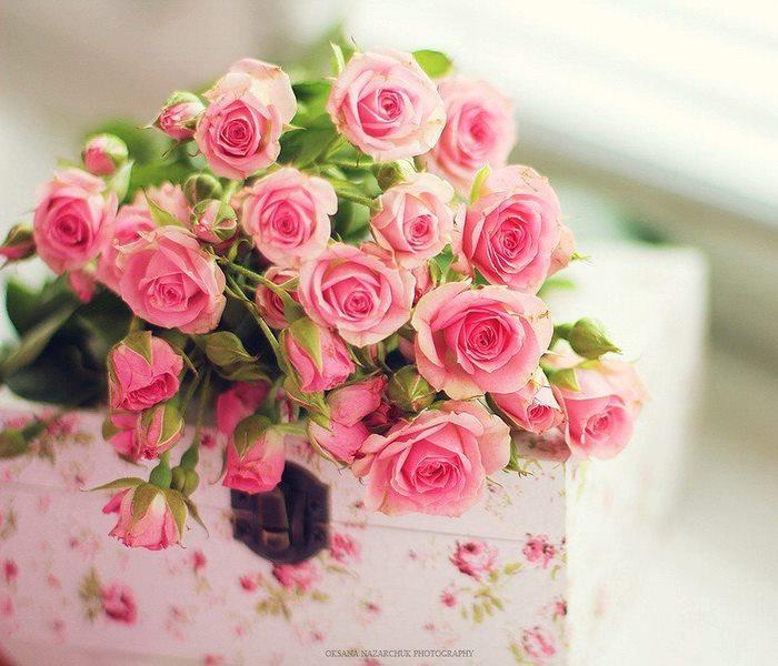 rosessi.jpg