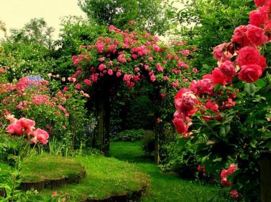 rosestonnelle.jpg