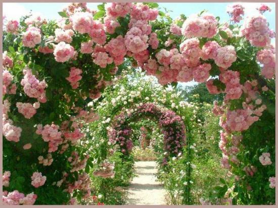 Rosestonnelle2