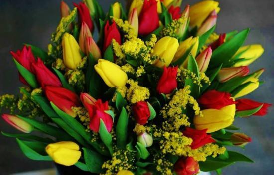Tulipesj